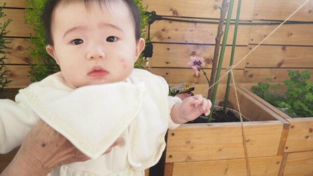 桃の木と赤ちゃん